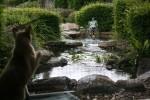 Bronson loves the pond room