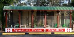 Special care cattery for diabetic and elderly guests