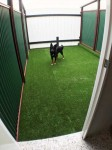 Luxury Units for indoor pets -  Large dog unit, look how much room they have to play