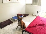Luxury Units for indoor pets -  Enough beds to choose from