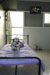 Luxury Units for indoor pets -  All the comforts of home