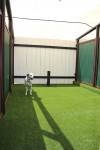 Luxury Units for indoor pets -  Just relaxing on the lush turf