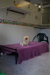 Luxury Units for indoor pets -  Our Mickey and Minnie mouse themed small pet unit